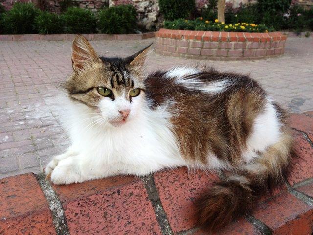 2イスタンブールの猫