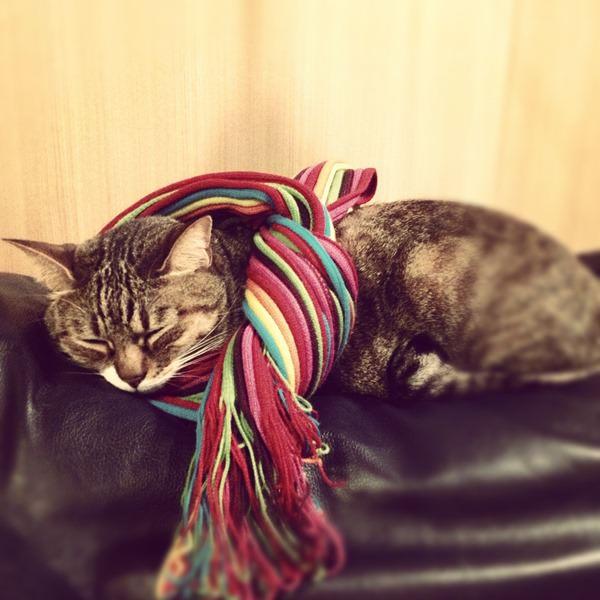 眠る猫店員