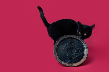 ちーちーと黒猫 小